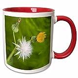 3dRose Danita Delimont - Flowers - WA, Redmond, Tansy Mustard, Flower - US48 JWI2148 - Jamie and Judy Wild - 11oz Two-Tone Red Mug (mug_96163_5)