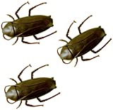 Roach O Rama Cockroach Racing Crawlers