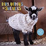 Baby Animals in Sweaters 2020 Wall Calendar