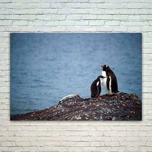 Westlake Art Poster Print Wall Art - Penguin Bird - Modern Picture Photography Home Decor Office Birthday Gift - Unframed - (Happy Feet Penguin Pictures)