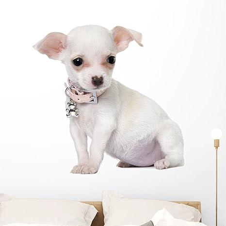 Amazon com: Wallmonkeys Cute Dainty Chihuahua Puppy Wall