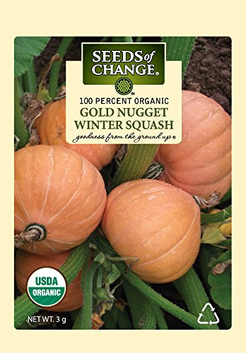 Nugget Flower - Seeds of Change 01593 Certified Organic Gold Nugget Winter Squash