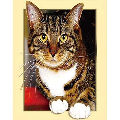 【2019 Latest Diamond Painting】5D DIY Diamond Painting Kit,3D Full Diamond Cross Stitch Craft kit Embroidery Rhinestone Cross Stitch Arts Craft,Family, Room (Tabby cat)