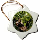 3dRose orn_86913_1 Panama, Panama City, Three-Toed Sloth Wildlife SA15 CZI0561 Christian Ziegler Snowflake Ornament, Porcelain, 3''