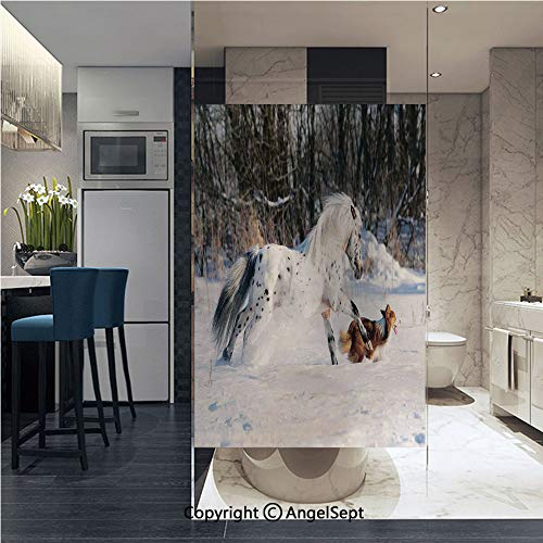 (Window Door Sticker Glass Film,Legendary Appaloosa Pony and Sable Border Collie Runs Gallop in Winter Photo Print Anti UV Heat Control Privacy Kitchen Curtains for Glass, 22.8 x 35.4 inch,Multicolor)