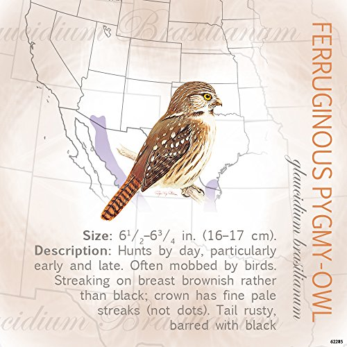 Tree Free Greetings Refrigerator Magnet  3 5X3 5 Inches  Ferruginous Pygmy Owl By Roger Tory Peterson  62285