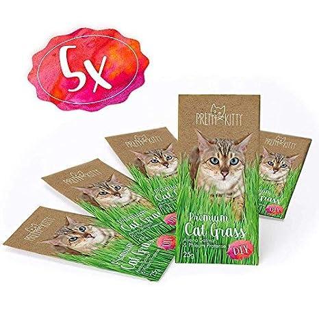 PRETTY KITTY 5X Semillas de Menta de Gato Premium - Paquete de 5 Bolsas con Semillas de Hierba gatera para Aproximadamente 50 macetas: Amazon.es: Productos ...