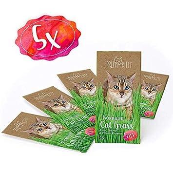 PRETTY KITTY 5X Semillas de Menta de Gato Premium - Paquete de 5 Bolsas con Semillas de Hierba gatera para Aproximadamente 50 macetas