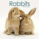 Rabbit Calendar - Cute Animal Calendar