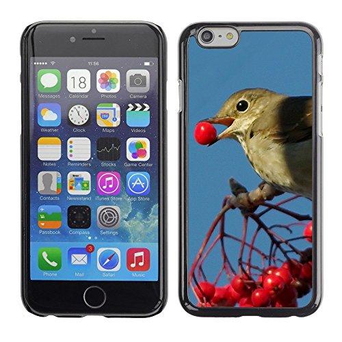 "Premio Sottile Slim Cassa Custodia Case Cover Shell // F00003544 oiseau manger // Apple iPhone 6 6S 6G 4.7"""