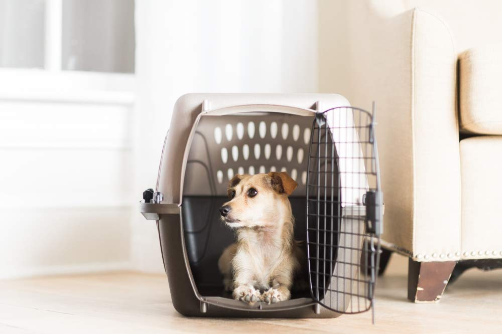 What size dog crate do you need to fly with your pets