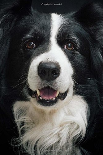 Border Collie Portrait (Border Collie Portrait Journal: Take Notes, Write Down Memories in this 150 Page Lined Journal)