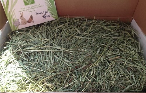 Small Pet Select 25-Pound 2Nd Cutting Timothy Hay Pet Food, Green by Small Pet Select (Image #4)