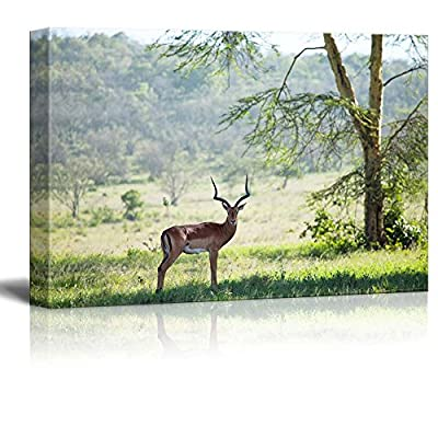 Canvas Prints Wall Art - Antelope Gemsbok in African Savannah | Modern Wall Decor/Home Art Stretched Gallery Wraps Giclee Print & Wood Framed. Ready to Hang - 32