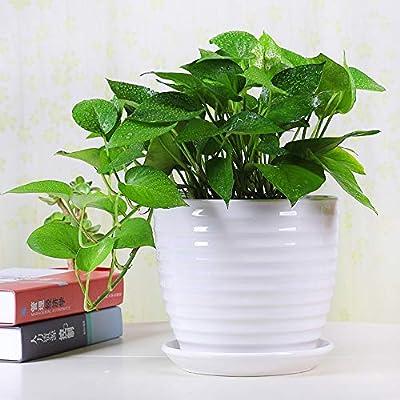 Fasmov Round Modern Ceramic Garden Flower Pots White Succulent Cactus Plant Pots, Set of 3 : Garden & Outdoor