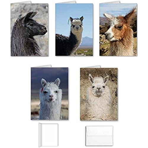 Llama Note Cards Value Pack - Best Set of 10 Assorted Blank Inside All Occasion Foldover Greeting Cards with Envelopes Sales