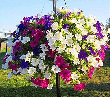 200PCS Mixed Colors Hanging Petunia Flower Seeds Balcony Bonsai-Calibrachoa New