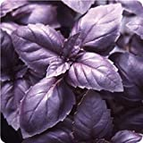 Bulk Organic Purple Basil Seeds (1 oz)