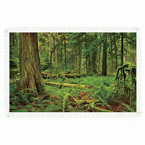 ngle Velvet Linen Tablecloth,Farm House Decor,Idyllic Lush Rainforest in Canadian Island with Ferns Moss on Tree Nature Photo,Green,for Dinner Kitchen Home Decor ()