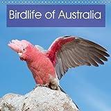 Birdlife of Australia 2018: A Beautiful Calendar That Showcases Some of the Unique Birdlife of Australia (Calvendo Nature)