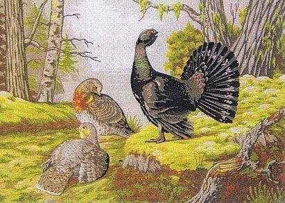 Auerhahn Gobelinstramin-Gobelin 69.85 cm x 50.16 cm