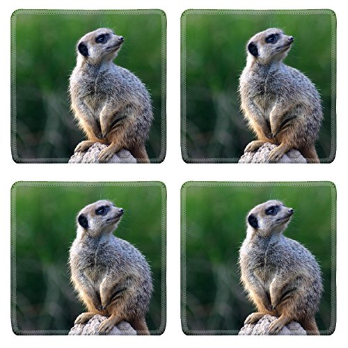 Luxlady Square Coasters Non-Slip Natural Rubber Desk Coasters grey Meerkat standing erect on his watch on a rock IMAGE ID -