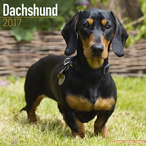 Dachs (Dachshund Costumes For Sale Uk)