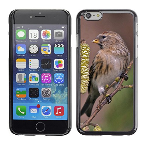 "Premio Sottile Slim Cassa Custodia Case Cover Shell // F00005426 oiseau // Apple iPhone 6 6S 6G PLUS 5.5"""