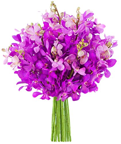 Kabloom Moondance Purple Mokara Orchids (20 stems) - The KaBloom Collection Flowers Without Vase Moondance Collection