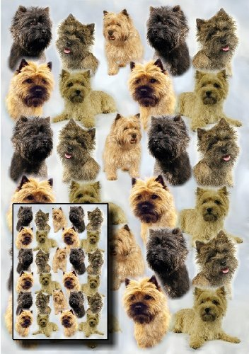 Cairn Terrier Dog Gift Wrapping Paper with Small Gift Card Design by Starprint by - Cairns Shopping