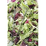 500 Mesclun Mix Lettuce Seeds Mixed Greens Great For Salad by RDR Seeds
