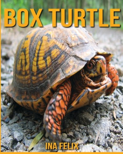 Box Turtle: Children Book of Fun Facts & Amazing Photos on Animals in Nature - A Box Turtle Book for Kids aged 3-7