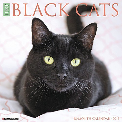 Just Black Cats 2019 Wall Calendar