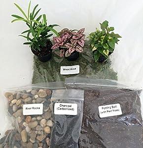 terrariumfairy garden kit with 3 plants create your own living terrarium. beautiful ideas. Home Design Ideas