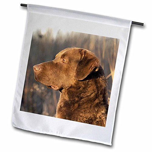 3dRose Dogs Chesapeake Bay Retriever - Chesapeake Bay Retriver Portrait - 18 x 27 inch Garden Flag (fl_5324_2)