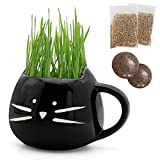 Product review for Teagas Organic Cat Grass Kit with Cat Grass Planter, Organic Soil and Pet Grass Seeds, Natural Hairball Control and Hairball Remedy for Cats