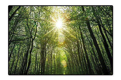 Water-Repellent Rugs Summer Trees Upward View with Sunrays Leaking from Branches Nature Image Fern Green Yellow Anti Bacterial 4'x5'