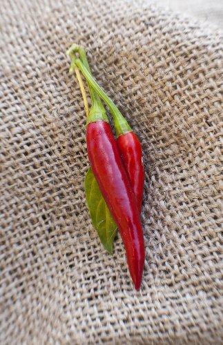 Thai Dragon Heirloom Chili Pepper Premium Seed Packet + More