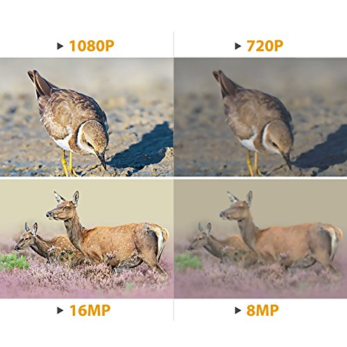 DIGITNOW Trail Camera 16MP 1080P HD Waterproof, Wildlife Hunting Scouting Game Camera with 40Pcs IR LED Infrared Night Vision Up to 65FT /20M, Surveillance Camera 130° Wide Angle 120° Detection by DIGITNOW (Image #3)
