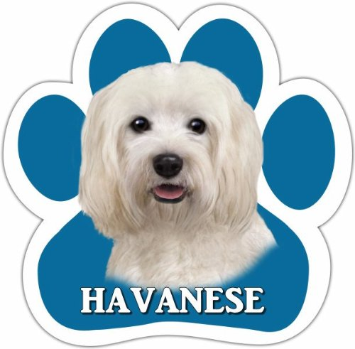 Havanese Car Magnet With Unique Paw Shaped Design Measures 5.2 by 5.2 Inches Covered In UV Gloss For Weather Protection