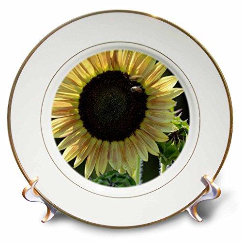 """3dRose cp_179158_1 Golden Sunflower Porcelain Plate, 8"""""""