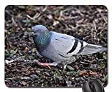 Mouse Pad - Pigeon Dove Rock Dove Columba Livia Bird Animal