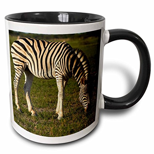 (3dRose Danita Delimont - David Wall - Zebra - Burchells zebra, Equus quagga, Nxai Pan NP, Botswana, Africa - 15oz Two-Tone Black Mug (mug_188076_9))