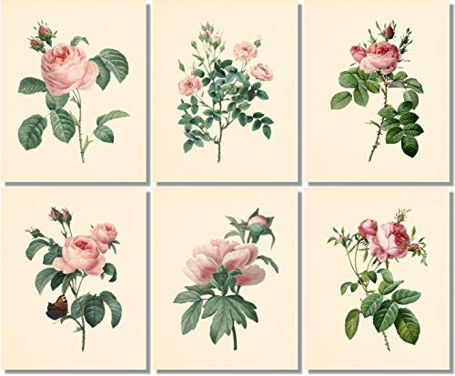 Flower Wall Art - Vintage Pink Roses Botanical Prints (Set of 6) - 8x10 - Unframed - Floral -