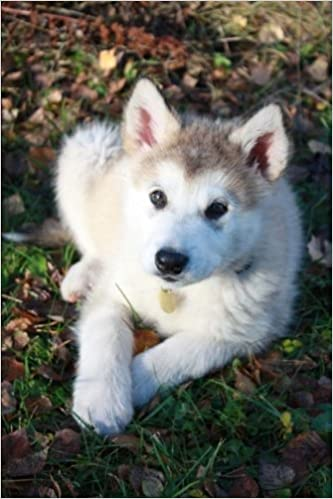 Buy Alaskan Malamute Puppy Dog Journal 150 Page Lined Notebook
