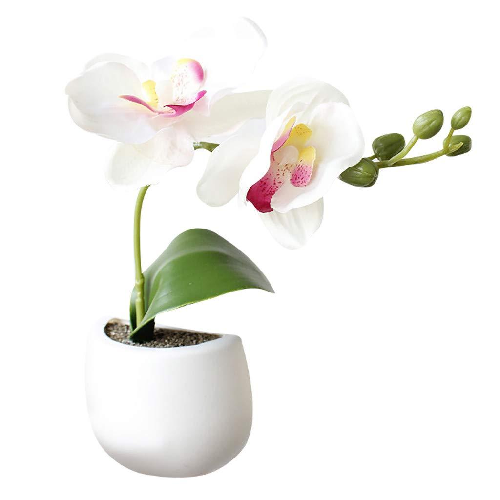 simpyfine R/éfrig/érateur de Plantes Succulentes de Fleurs Artificielles Papier Vert Aimant Plante Verte Aimant Frigo Puissant 3D R/éfrig/érateur Autocollant Enfant A
