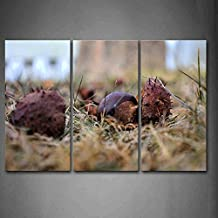 Chestnuts On The Ground Wall Art Painting Pictures Print On Canvas Botanical The Picture For Home Modern Decoration