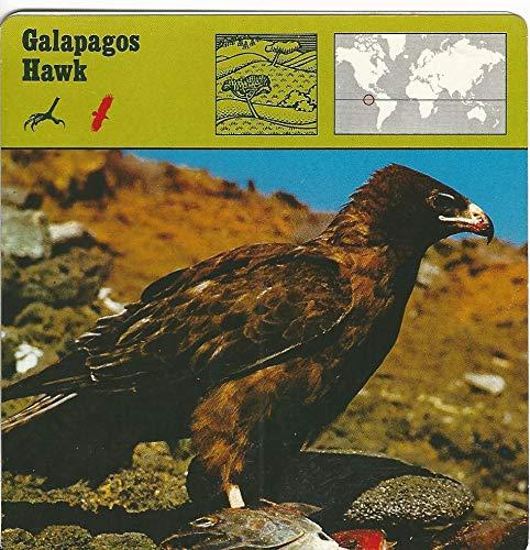 (1975 Editions Rencontre, Animals Card, 01.09 Galapagos Hawk )