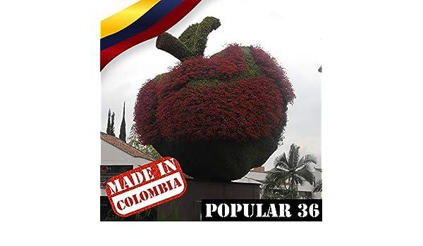 Made In Colombia: Popular Vol. 36 by Varios Artistas on Amazon Music - Amazon.com