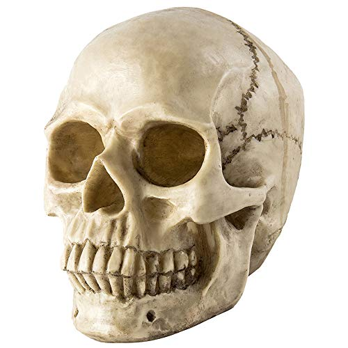 Hootech Halloween Props Life Size Realistic Human Skull Head Bone Model Replica Home Decor Halloween Party Decorations
